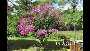 Taille Du Lilas Des Indes : le jardin des d butantes lilas des indes youtube ~ Nature-et-papiers.com Idées de Décoration