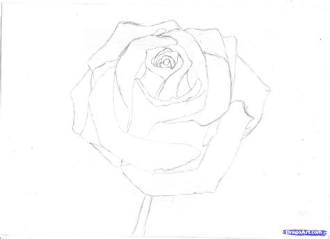 draw  rose  pencil draw  realistic rose step
