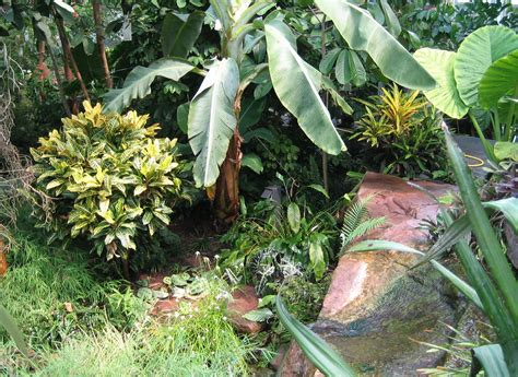 Fileaugsburg Bot Garten Tropenpflanzenjpg Wikimedia