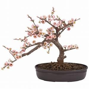 Cherry Blossom Bonsai 4764