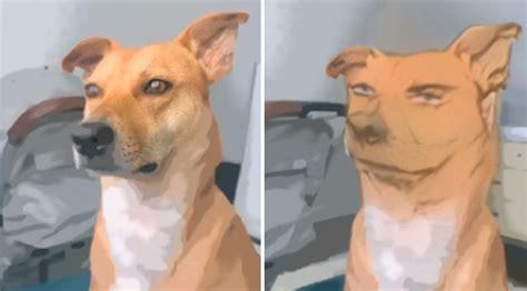 woman  anime filter   dog   hilarious