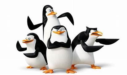 Madagascar Penguins Penguin Transparent Icon Clipart Bx