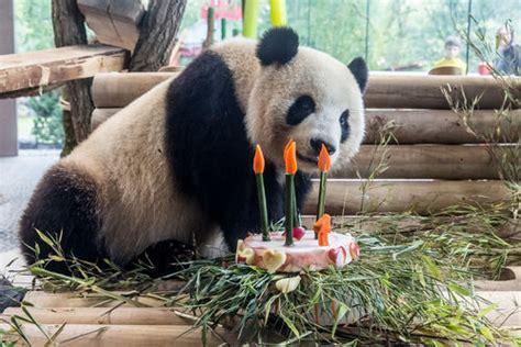 Zoologischer Garten Berlin Panda by Zoo Berlin Article