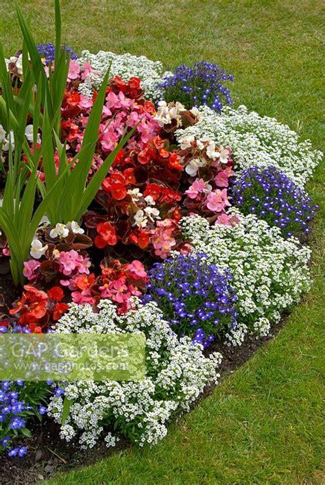 gap gardens lobularia maritima syn alyssum maritimum