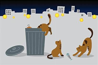 Stray Cats Vector Feral Clip Illustrations Istock