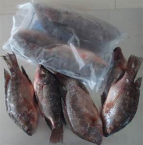 Fresh Water Nile tilapia Whole Round, View Nile tilapia ...
