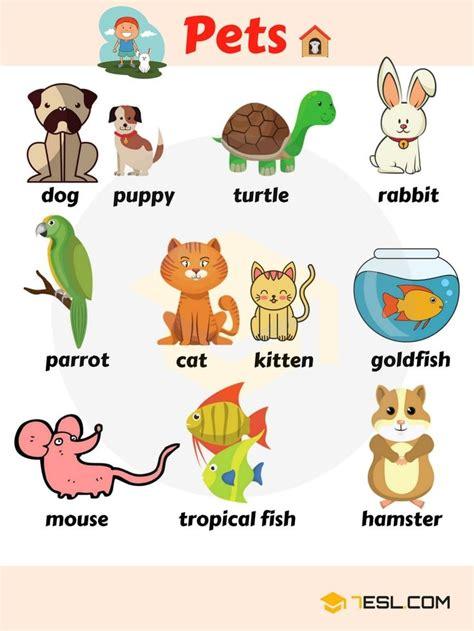 pet names list  pets types  pets  pictures