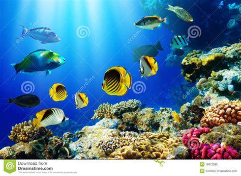 tropische vissen  koraalrif stock foto afbeelding