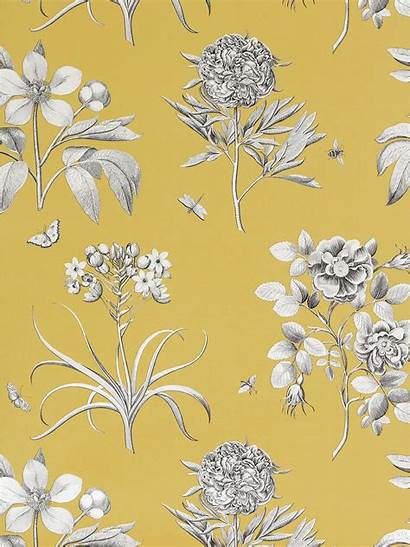 Yellow Sanderson Roses Etchings Lewis John Johnlewis