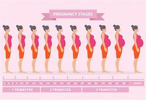 Pregnancy Body Changes  U2013 Week 1 To Week 42