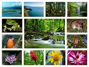 flora and fauna rainforest collages images - Buscar con ...