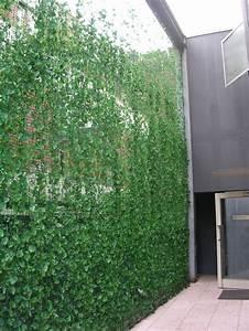 Plantes Grimpantes Mur : haie et brise vue artificiels quels sont les types ~ Melissatoandfro.com Idées de Décoration