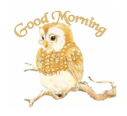 Owl Morning Tenor Gifs Owls Wise Animations