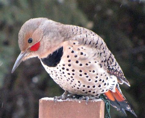 113th annual christmas bird count bird canada