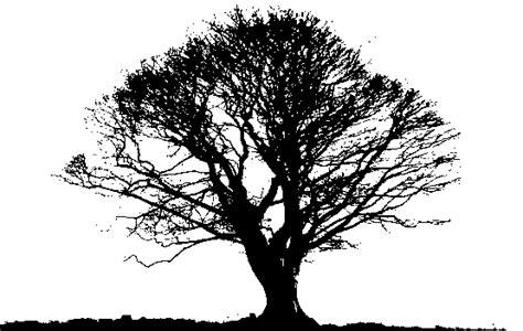 black trees reaching towards faith growth creativity