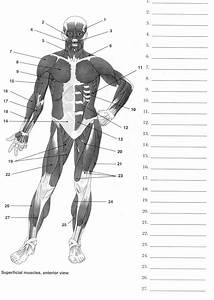 17 Best Images Of Human Muscle Worksheets