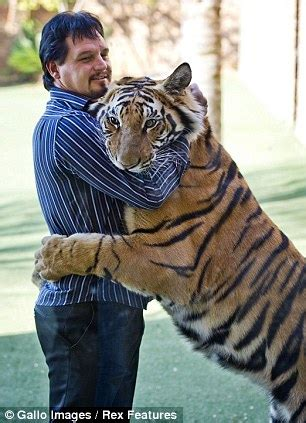 tale   tigers south african man loves big cats