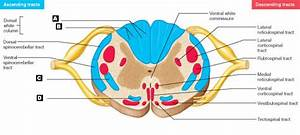 Label The Parts Of The Spinal Cord