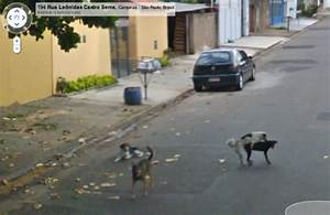College Essay Topics Top 10 Pictures Of Random Dogs Bro J Simpson