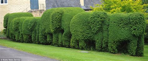 homeowner sick   view   wild hedge snips