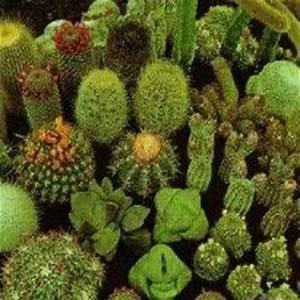 Amazon.com : Outsidepride Cactus Seed Mix - 1000 seeds ...