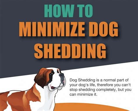 stop shedding how to stop and minimize shedding infographic