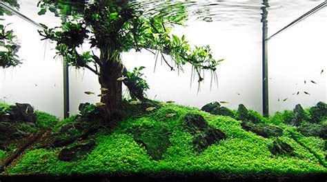 Aquascape Tree by Aquarium Photography Tutorial For Aquascaping Scapefu