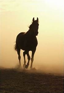 Silhouette | An... Free Horses Quotes