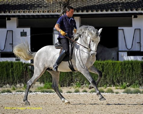 andalusian horse horses spanish history dressage equestrian discoveries dna jerez arabian cowboy