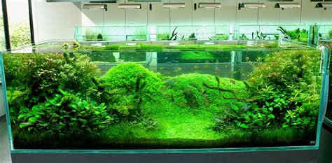 Japanese Aquascape by Nature Aquariums And Aquascaping Inspiration