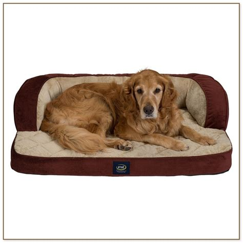 cheap medium sized beds beds for medium sized dogs beds and costumes