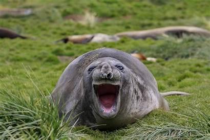 Wildlife Comedy Awards Funny Animal Amy Guffaw