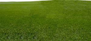 Grass   Free Images at Clker.com - vector clip art online ...