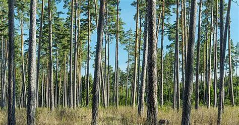 Par jaunu, kvalitatīvu un produktīvu mežaudžu veidošanu ...