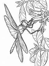 Dragonfly Coloring Bloem Libelle Dragonflies Kleurplaat Ausmalbilder Libellen Kleurplaten Votes Malvorlagen Ausdrucken Kostenlos Zum sketch template