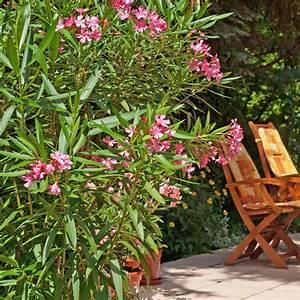 Balkonpflanzen Sonnig Pflegeleicht : pflegeleichte balkonpflanzen f r sonnige standorte mein sch ner garten ~ Frokenaadalensverden.com Haus und Dekorationen