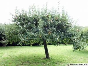 Quand Planter Un Pommier : planter un arbre fruitier ~ Dallasstarsshop.com Idées de Décoration