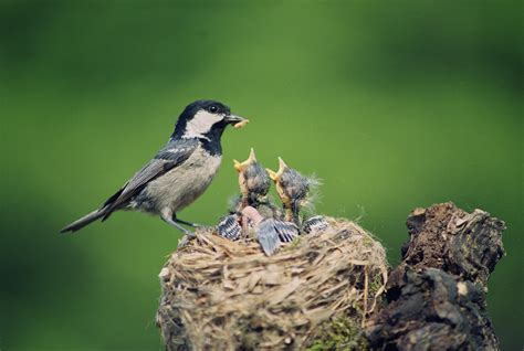 woodlawn nature series presents what can bird nests teach