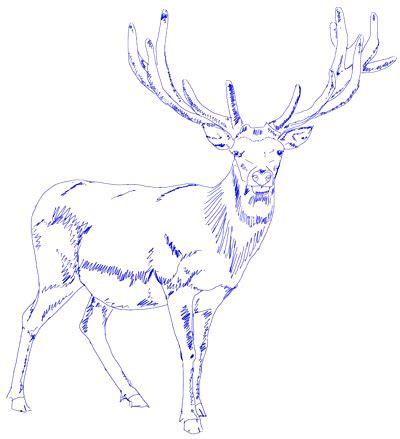 draw  deer draw step  step