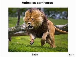 Maestra de Primaria: Animales carnívoros Vocabulario en imágenes listo para imprimir