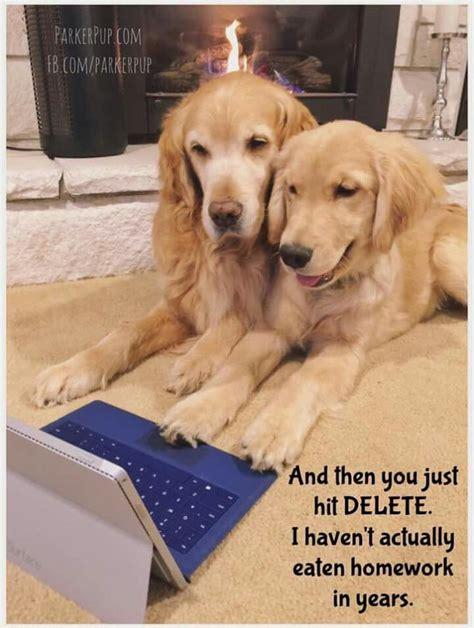 Golden Retriever Memes - funny golden retriever memes www imgkid com the image kid has it
