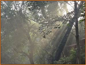 Early Morning Sun-rays at Sanjay Gandhi National Park ...