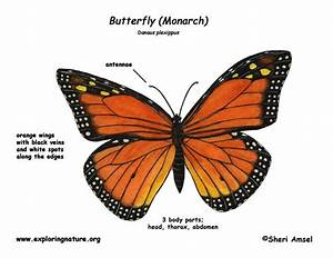 Monarch Butterfly Animation
