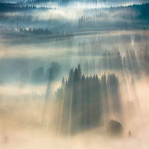 Forests drenched in light and fog by boguslaw strempel for Forests drenched in light and fog by boguslaw strempel