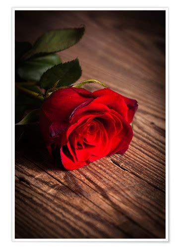 rote rose auf holz poster  bestellen posterloungede