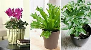 Plante Detoxifiante : plantes pour la chambre plantes d polluantes ~ Melissatoandfro.com Idées de Décoration