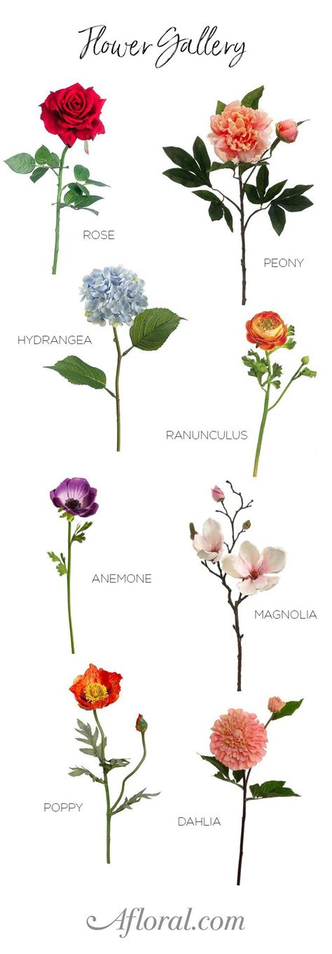 type of flowers best 25 flower types ideas on pinterest bouquet wedding bouquets and bouquets