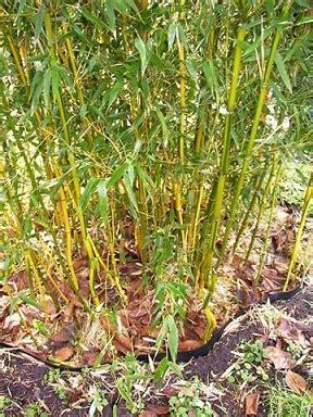 Botanischer Garten Zürich Oeffnungszeiten by Bambus Vom Limhorn