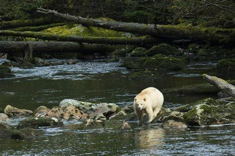 Great Bear | Greenpeace Canada
