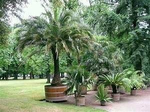 Palmier De Jardin : palmier en pot comment le choisir et le cultiver ~ Nature-et-papiers.com Idées de Décoration